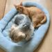 ニトリ唯一のペット用品ぺットベッド 我が家の犬と猫が使ってみました